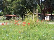DSP  camping de l'Apamée