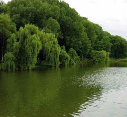 TP4639- Région Picardie - Cadre verdoyant